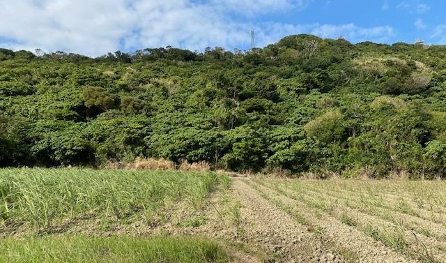 堆肥と肥料の違い