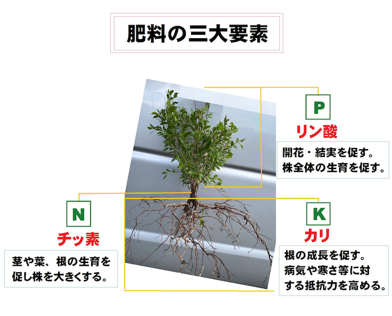 堆肥と肥料の違い。その2